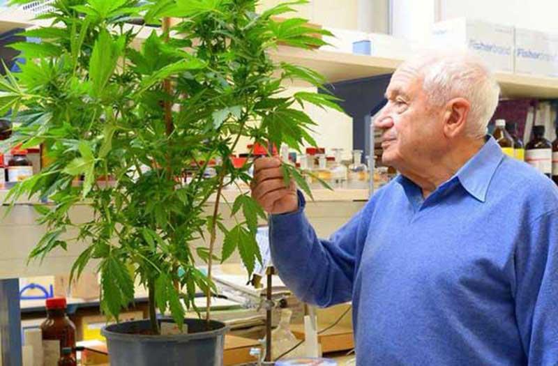 La marijuana médicinale: classement des 10 maladies curables avec son traitement